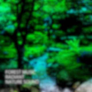 Forest Music: Radiant Nature Sound