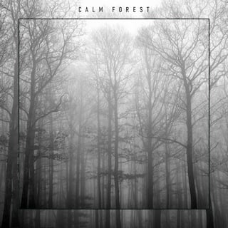 Calm Forest – Beautiful Nature Sounds for Relaxation, Peaceful Place, Soothing Noise