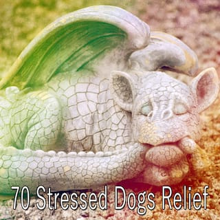 70 Stressed Dogs Relief