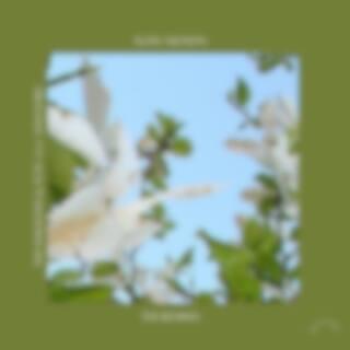 Slow Motion (Boston Bun & Punctual Remixes)