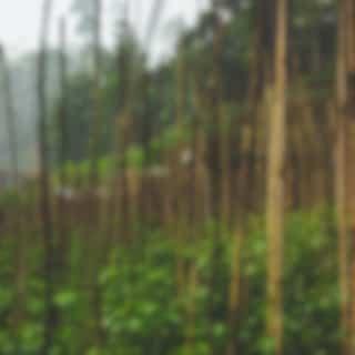 Sonidos Ambientales | Relajarse Y Dormir