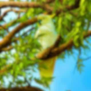 Wild Parrots: Relaxing Australia Nature