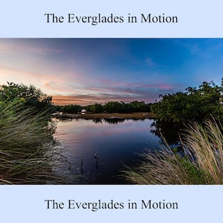 The Everglades in Motion