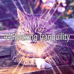 44 Relaxing Tranquility