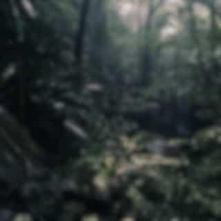 Música Ambiental Pacífica | Sueño Profundo