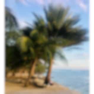 Levante / Relaxation Meditation Music, Brain Stimulation for Meditation, Sweet Sensations