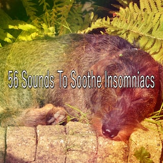 56 Sounds to Soothe Insomniacs