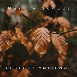 Perfect Ambience