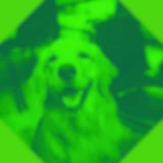 Modern Music for Dogs - Trumpet Jazz