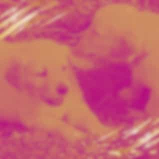 Tenor Sax Jazz - Background for Rescue Puppies