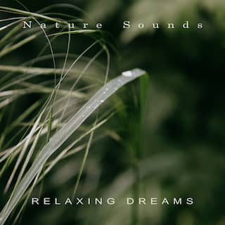 Relaxing Dreams