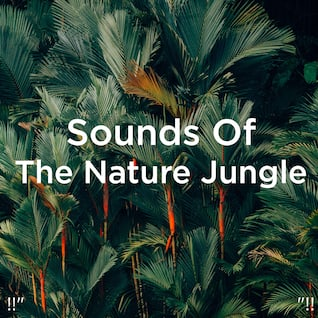 """!!"""" Sounds Of The Nature Jungle """"!!"""