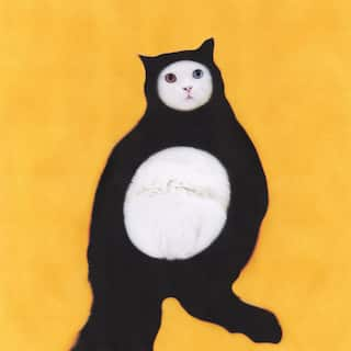 Толстый котик