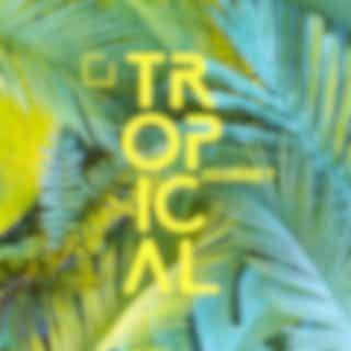 Tropical Journey - Hawaiian Music for Deep Relaxation - Catch the Sun