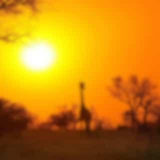 Savannah Evening: Wild Nature of Africa