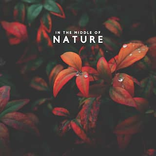 In the Middle of Nature – Relaxing Flora and Fauna Sounds for Rest, Study, Meditation or Sleep