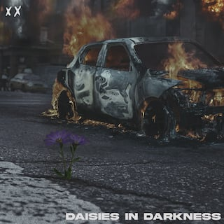 Daisies In Darkness