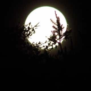 Melody in Moonlight