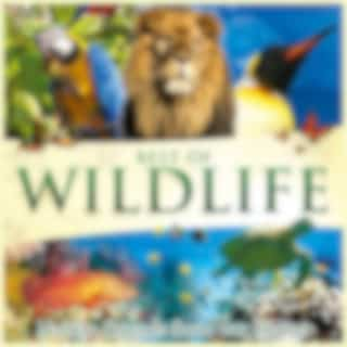 Best of Wildlife - Nature Sounds from Our Planet