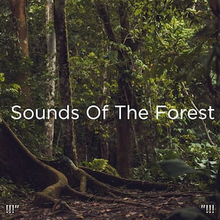 "!!!"" Sounds Of The Forest ""!!!"