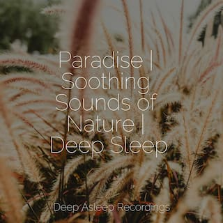 Paradise | Soothing Sounds of Nature | Deep Sleep