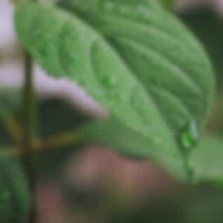 25 Sonidos de la Naturaleza: Música Potente Para Un Sueño Profundo
