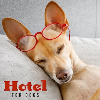 Hotel for Dogs: Relaxing Chill Music for Pets