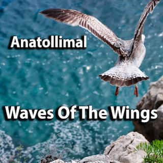 Waves Of The Wings