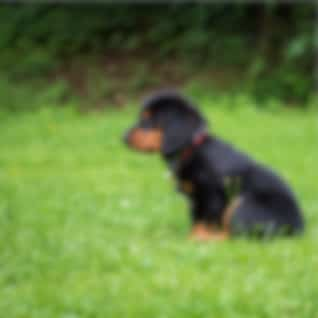 Complete Relaxation Mix for Dogs