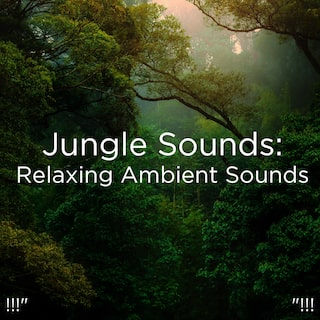 "!!!"" Jungle Sounds: Relaxing Ambient Sounds  ""!!!"