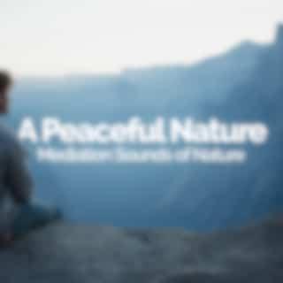 A Peaceful Nature